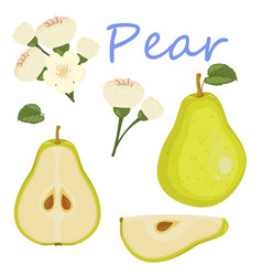 fresh pear icon green pear vector image vector image