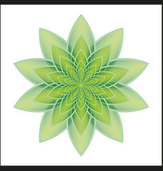 lotus flower green vector image
