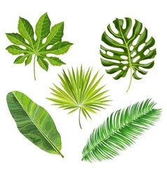 Set of tropical palm leaves vector