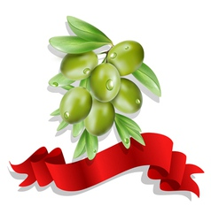 Olive branch with red ribbon on white background vector