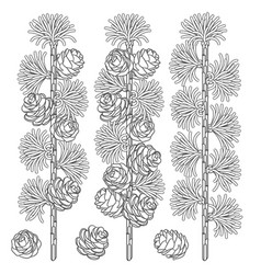 set of black and white images of larch branches vector image