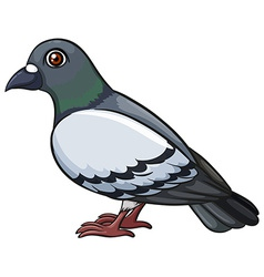 A pigeon vector