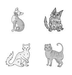 turkish angora british longhair and other species vector image