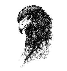 Eagle bird doodle hand drawn vector