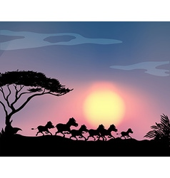Silhouette horses running in the field vector