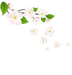 Pink Apple Tree Flowers Border vector image vector image