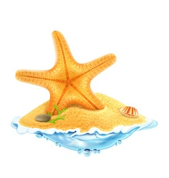 Starfish in the sand vector