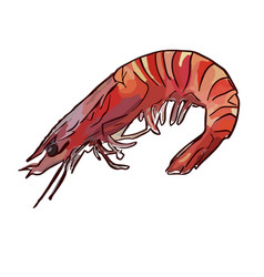 cooked uncooked shrimp vector image