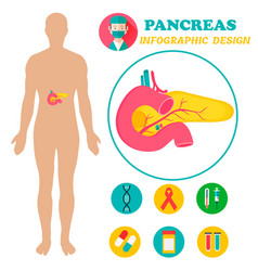 infographic poster with pancreas and human body vector image