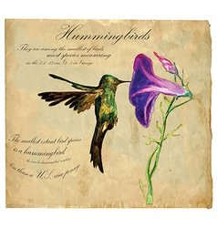 Hand painted bird hummingbird vector
