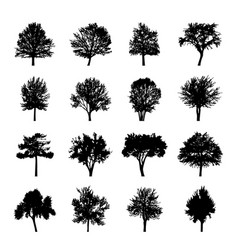 black tree silhouettes nature forest vector image