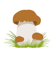 Boletus autumn cep edible forest mushrooms vector