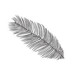 Full fresh leaf of sago palm tree sketch vector