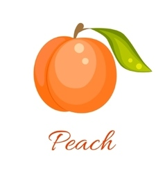 Orange peach icon vector image vector image