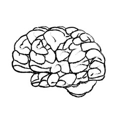 sketch brain human organ mind icon vector image
