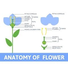 Detail of anatomy flower vector