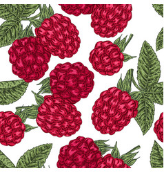 hand drawn sketchy berries ripe raspberry branch vector image vector image