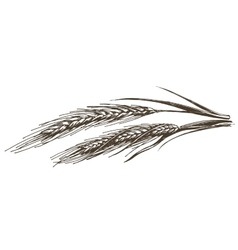wheat logo design template food or grain vector image