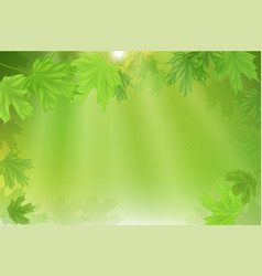 forest fresh green leaves with sun rays spring vector image