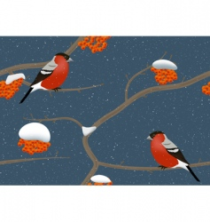 Bullfinches vector