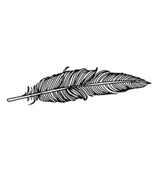 feather of bird doodle hand drawn vector image vector image