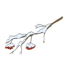 Winter rowan branch vector image vector image