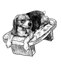 Beagle on chair vector