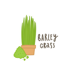 barley grass superfood vector image vector image