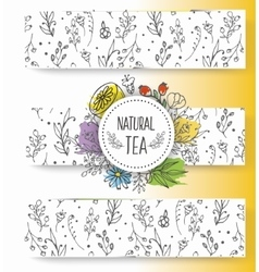 Herbal tea banners collection organic herbs and vector