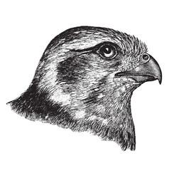 Prairie falcon head vintage vector