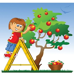 Boy picking apples vector