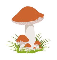 Lactarius quietus edible forest mushrooms vector