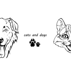 portrait of dog and cat vector image vector image