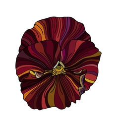Pansy flower drawing vector