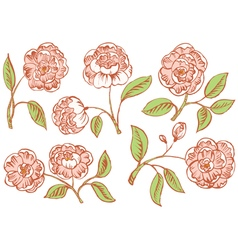 Floral rose vector