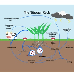 The nitrogen cycle vector
