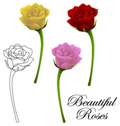 Beautiful roses vector