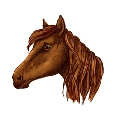 Brown graceful horse with sad eyes portrait vector