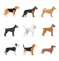 Different type of dogs breed set with Beagle vector image vector image