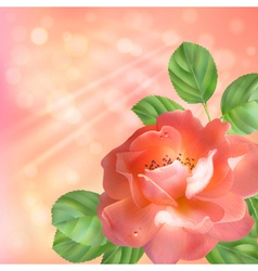 Floral background with rose sun and blur vector image vector image