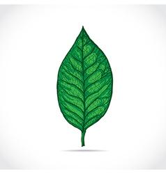 Magnolia leaf vector image vector image