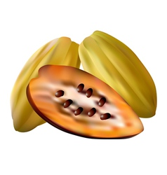 Cocoa pods vector