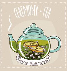 Glass teapot with chamomile tea vector