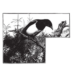 A magpie sitting on a tree branch looking down vector