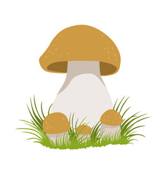Porcini edible forest mushrooms colorful cartoon vector