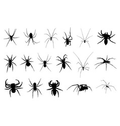 set of different spiders vector image vector image