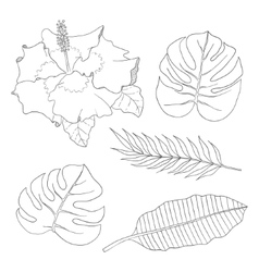 Set of leaves different species palm trees and vector image vector image