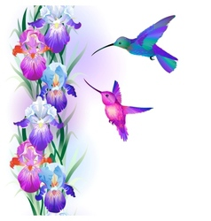 Seamless pattern with iris flowers and hummingbird vector