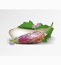 photo-realistic fresh aubergine on a vector image vector image