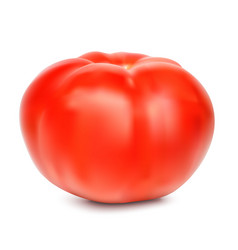 red whole tomato isolated on a white background vector image vector image